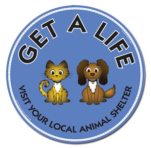 &quot;Get A Life Visit Your Local Animal Shelter&quot; Car Magnet